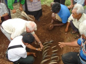 Burying the cow horn for BD 500